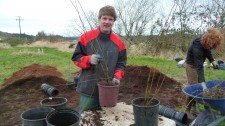 Dave, Potting up a Nootka Rose