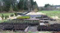 These native trees and shrubs will be used in restoration plantings